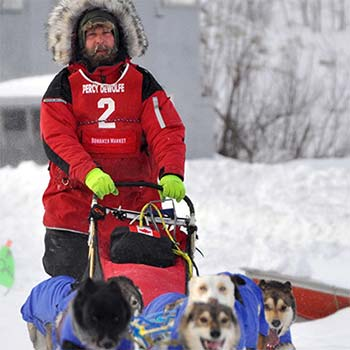a musher and his dog team, the guide for dog sledding excursions