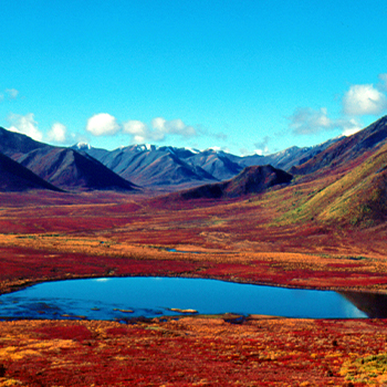 Fall colours at Tombstone Territorial park